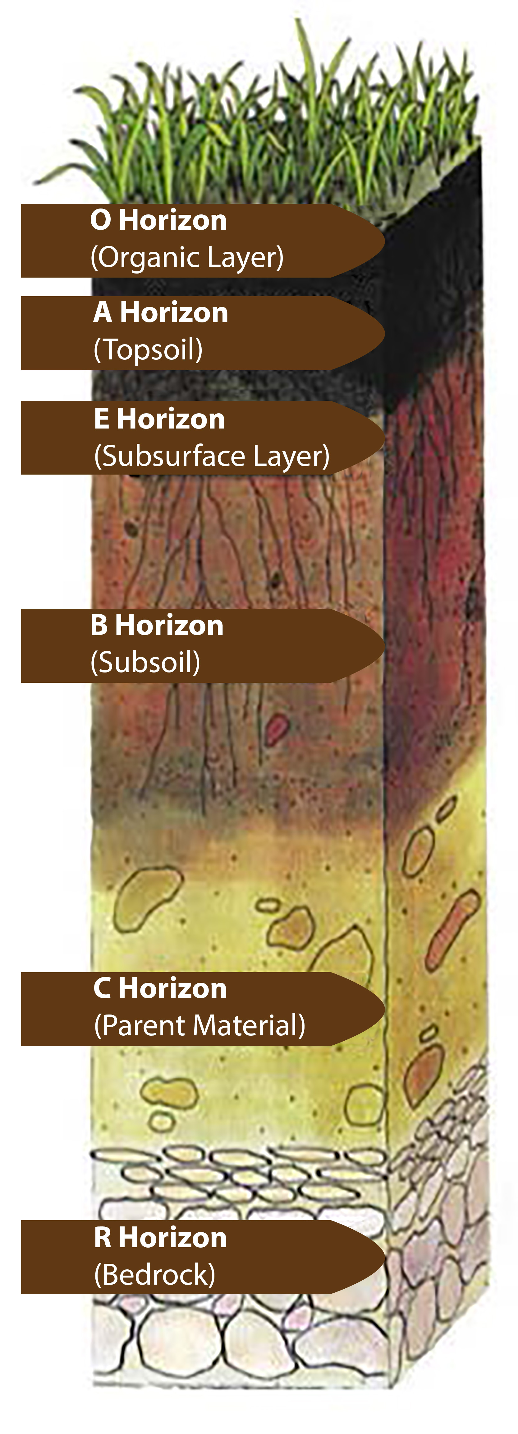 What is soil part 1 1 for Soil horizons